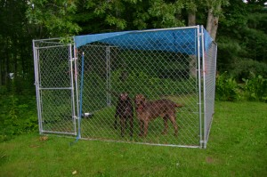 Take a break from your dogs and use the kennel at Cloud 9 Relaxation Home.