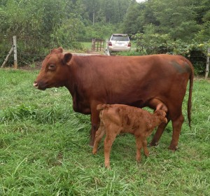 Elsie the Cow with Baby Helen